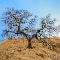 A lonely tree on a hill top