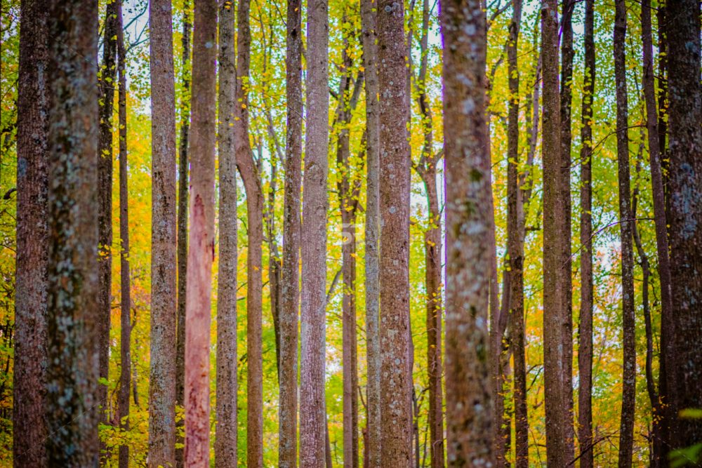 Colorful fall forest landscape