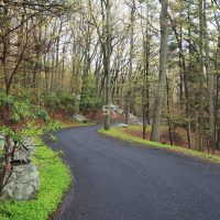 Road in the beautiful forest surrounded by bright green grass and moss covered rocks