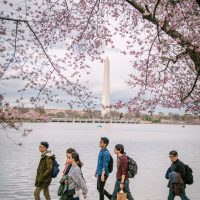 Young tourists walking past the Washington DC Monument surrounded by Cherry Blossums
