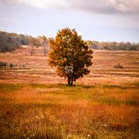 Breathaking fall  tree and scenery
