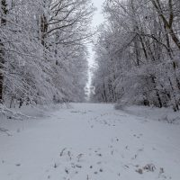 Beautiful winter landscape in the forest on
