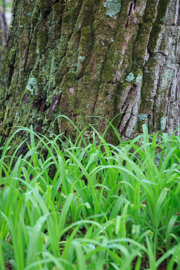 Tall green grass surounding a large tree in the forest
