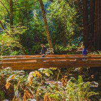 Two hikers walking on a bridge in the beautiful forest enjoying the sunny day