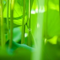 Bright green stems growing in sunlight on a sunny day in nature