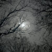 Night time view of the rainy  sky covered by trees