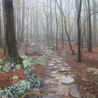 Misty forest rocky path