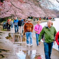 Tourists enjoying their time at the Washington DC Cherry Blossum Festival