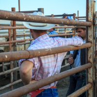 Cowboys looking at the bulls  before the rode