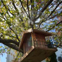 Close up on a birdhouse hung on a tree on  tree