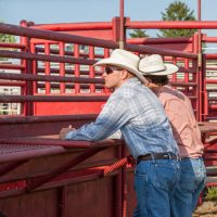 Two men talking and checking out the cattle at the rodeo