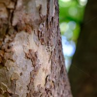 Detailed thick tree trunk in the forest