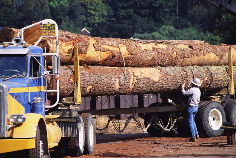 Worker secures logs on logging truck