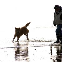 Man on beach with dog