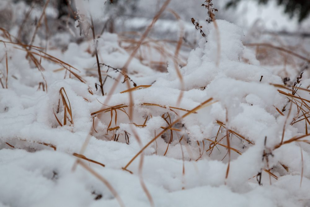 Close up of snow on the ground on a winter day