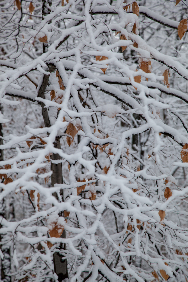 Snow covering branches and leaves on a cold winter day