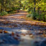 Fall winding forest mountain road autumn