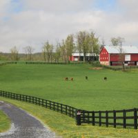 Epic landscape of the barnyard with animals and bright green grass